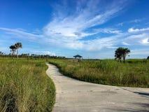Fotvandra slingan i evergladesna Arkivbild