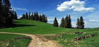 Fotvandra slingan i Kysucke Beskydy med ängen och trädet Arkivbild