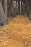 Fotvandra slingan i trän för en sörja i New England Royaltyfri Bild