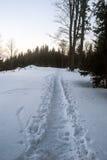 Fotvandra slingan i vinterMala Fatra berg i Slovakien Royaltyfri Foto