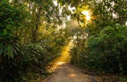Fotvandra slingan på Gunung Nuang Malaysia Arkivfoton