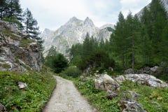 Fotvandra slingan till och med pinjeskog och alpina berg, Salzburg, Österrike Royaltyfri Fotografi