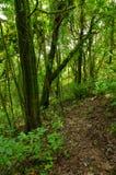 Fotvandra slingor i det urtids- för skog Royaltyfria Foton