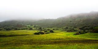 Fotvandra slingor på den regionala urskogen parkera på en dimmig dag Arkivfoto