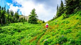 Fotvandra till och med de höga alpina ängarna som täckas i lösa blommor till överkanten av Tod Mountain Arkivfoto