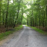 Fotvandra träsommarfamiljen Royaltyfri Fotografi