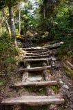 fotvandra trail Royaltyfri Foto