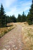 fotvandra trail Royaltyfria Foton