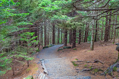 fotvandra trail Royaltyfri Bild