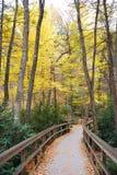 fotvandra trail för höst royaltyfri foto