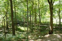 fotvandra trail för skog Arkivfoton