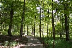 fotvandra trail för skog Arkivfoto