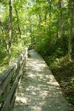 fotvandra trail för skog Arkivbild