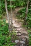 Fotvandra trail i en skog Royaltyfri Foto