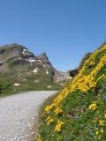 Fotvandra trail till bachalpseen switzerland Royaltyfri Bild