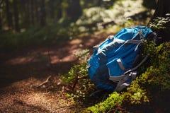 Fotvandra vandrar campa utrustning, att ligga framme av det enorma trädet, skognatur på bakgrund royaltyfria bilder