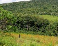 Fotvandrare för sommar för Catskill berg royaltyfri fotografi