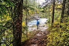 Fotvandrare för WhistlerKanada flod arkivfoto