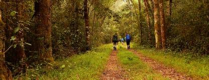 Fotvandrare i en skog fotografering för bildbyråer