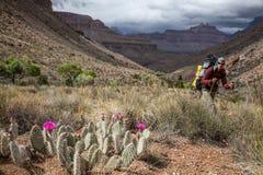 Fotvandrare i Grand Canyon, Arizona, USA Royaltyfri Fotografi
