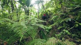 Fotvandrare med ryggsäcken som trekking i den täta rainforestresandemannen som går på skogbanan, medan resa i djungel lager videofilmer