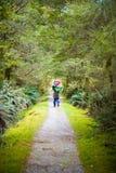 Fotvandrare på frodig djungelslinga med smutsbana på det Milford spåret in Fotografering för Bildbyråer