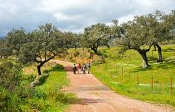 Fotvandrare på toppiga bergskedjan de naturliga Aracena parkerar, Spanien Fotografering för Bildbyråer