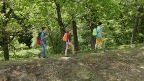 Fotvandrare som går på skog, kantar - tonåringar och kvinnafotvandrare stock video