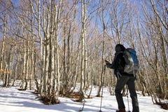 Fotvandraren går stigande till och med en bokträdskog Fotografering för Bildbyråer