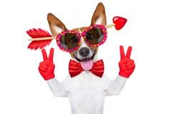 Fou chez le chien de valentines d'amour Photos libres de droits