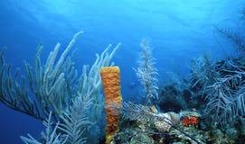 Fouets de mer et éponge jaune Photos libres de droits