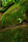 Fougère Photo libre de droits