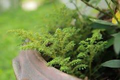 Fougère Photographie stock libre de droits