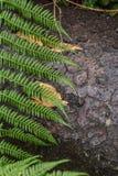 Fougère, après la pluie, forêt après pluie, pluie, ligne, feuilles, arbre, humidité images stock