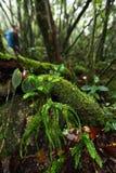 Fougère beaucoup espèce dans la forêt tropicale tropicale de jungle, nation de Khaoluang Photographie stock