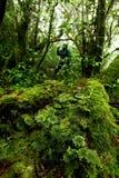 Fougère beaucoup espèce dans la forêt tropicale tropicale de jungle, nation de Khaoluang Photographie stock libre de droits