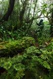 Fougère beaucoup espèce dans la forêt tropicale tropicale de jungle, nation de Khaoluang Images stock