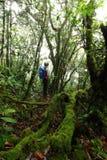 Fougère beaucoup espèce dans la forêt tropicale tropicale de jungle, nation de Khaoluang Image stock