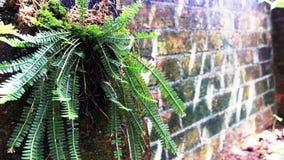 Fougère d'arbre Photo libre de droits