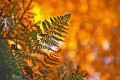 Fougère d'automne Photo stock