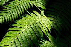 Fougère dans la forêt humide Photos libres de droits