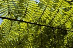 Fougère dans le contre-jour Photo libre de droits