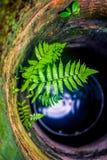 Fougère dans le puits d'eau photos stock