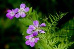 Fougère et fleurs pourprées Images libres de droits