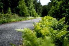 Fougère et la route Image libre de droits