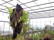 Fougère et orchidée à la terrasse Photos libres de droits