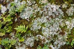 Fougère, lichen et Moss Background focalisés mous image libre de droits