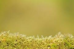 Fougère lumineuse sur le fond vert Images stock