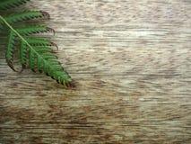 Fougère sur une table en bois Images libres de droits