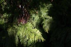Fougère verte avec un au sol de dos d'obscurité Image stock